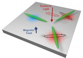 Electrons in elliptical valleys prefer elliptical light – towards bismuth valleytronics